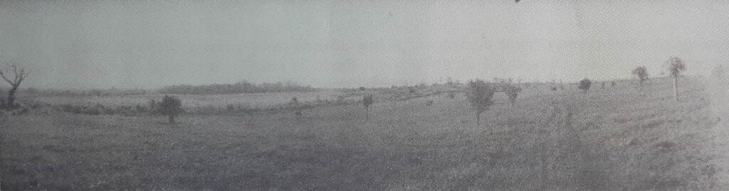 Figura 1. Vista panorámica hacia el sur del JBC. Al fondo y ligeramente a la izquierda, Seboruco. Primer plano, colección de Ficus. Foto: Dr. E.J. Stillman, Archivo JBC, 1941.