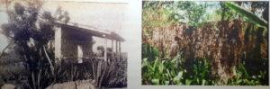 Figura 3. Cobertizo en Arizona. Foto a la izquierda E.J. Stillman, 1941. Archivo JBC. Foto derecha, cobertizo 60 años después, cortesía de H. Rodríguez, 2001.