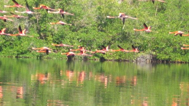 Laguna de Guanaroca, Cienfuegos, Cuba